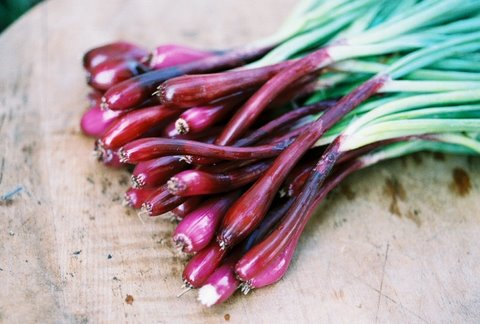 Red Purple Bunching Onions