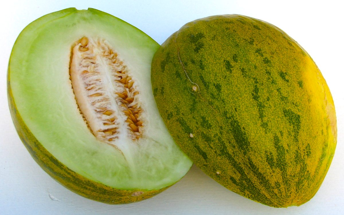 Melons Videos