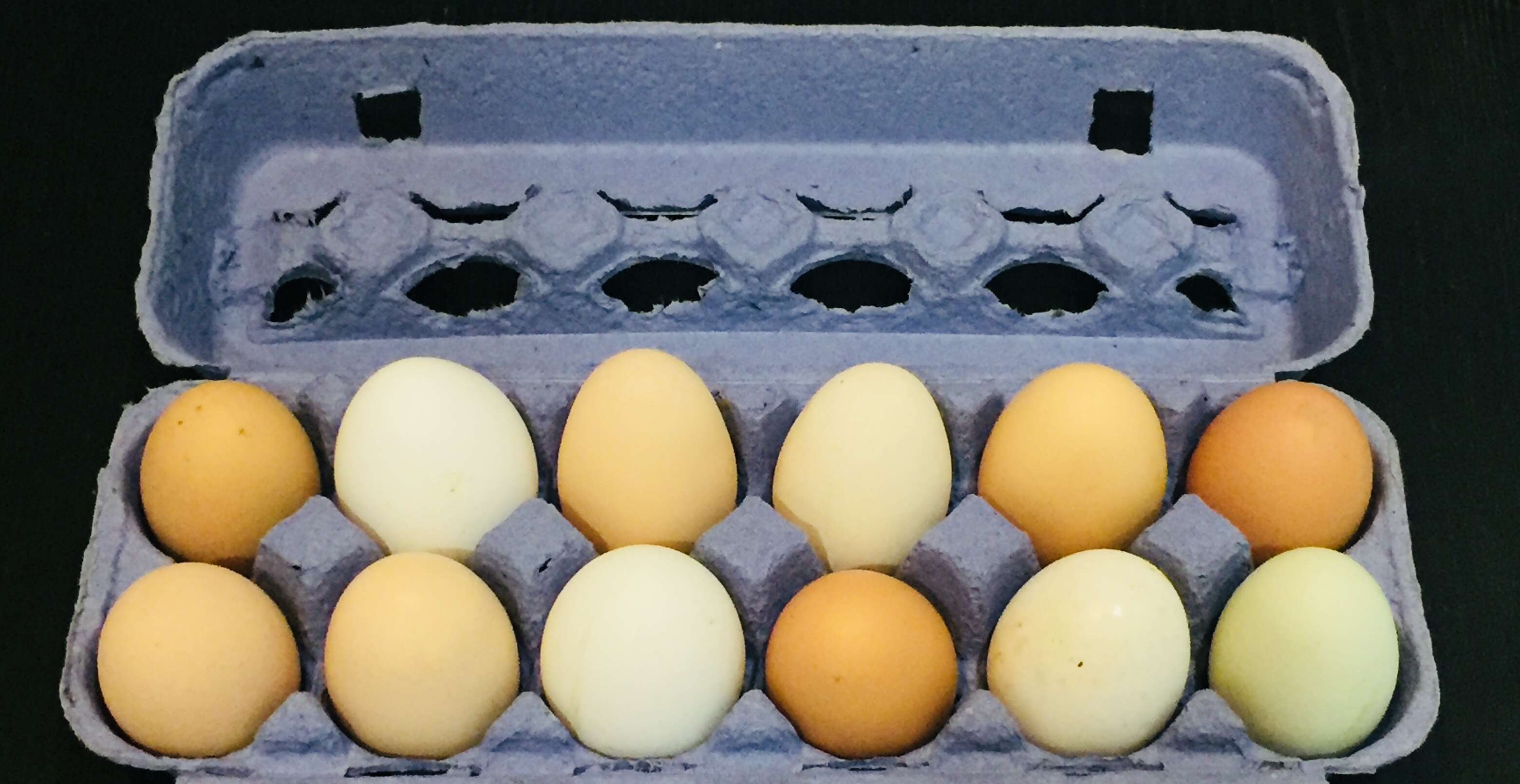http://blueskyorganicfarms.com/wp-content/uploads/2018/02/Egg-Photo.jpg