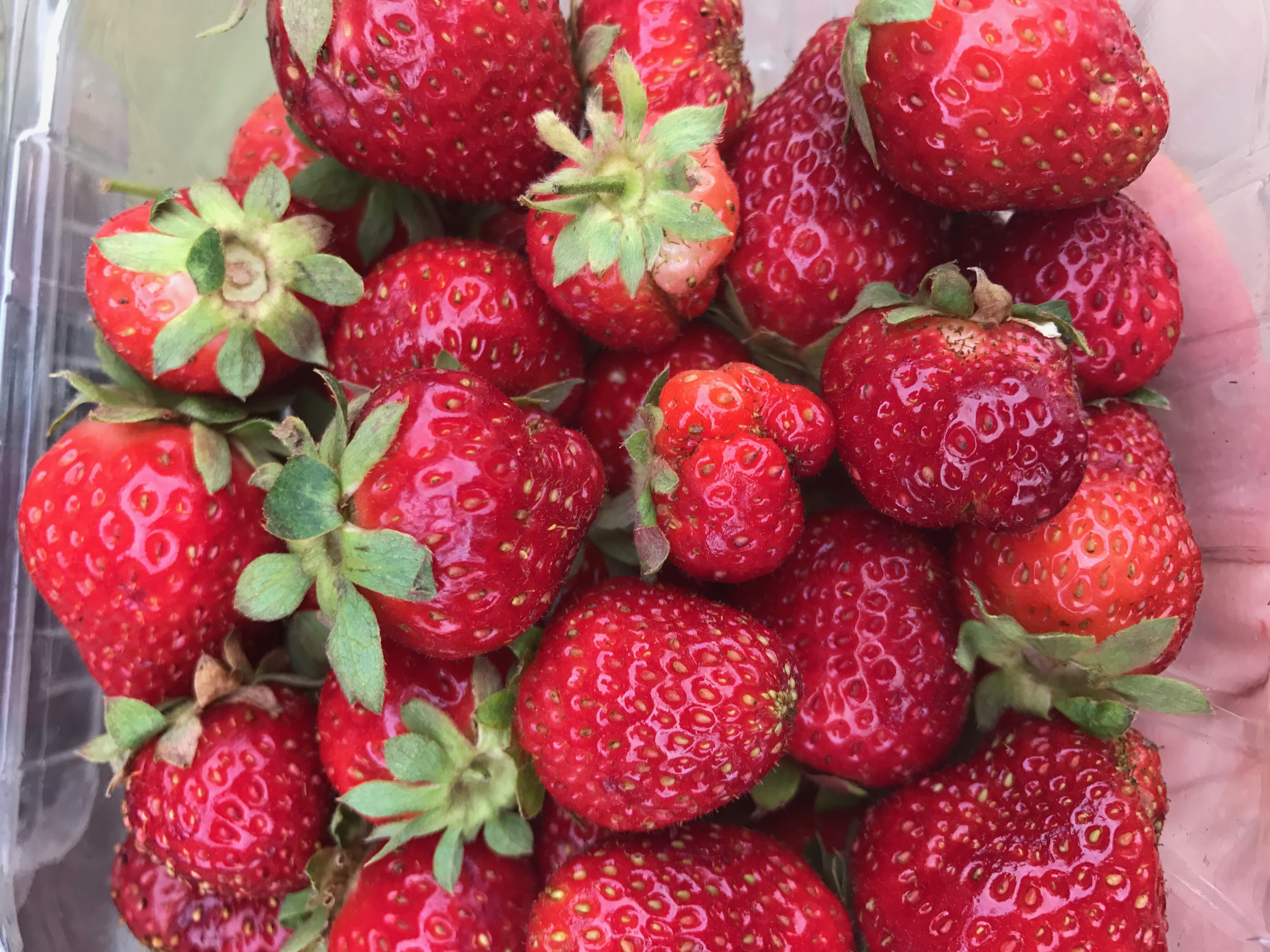 http://blueskyorganicfarms.com/wp-content/uploads/2018/02/Strawberry-Pic.jpeg