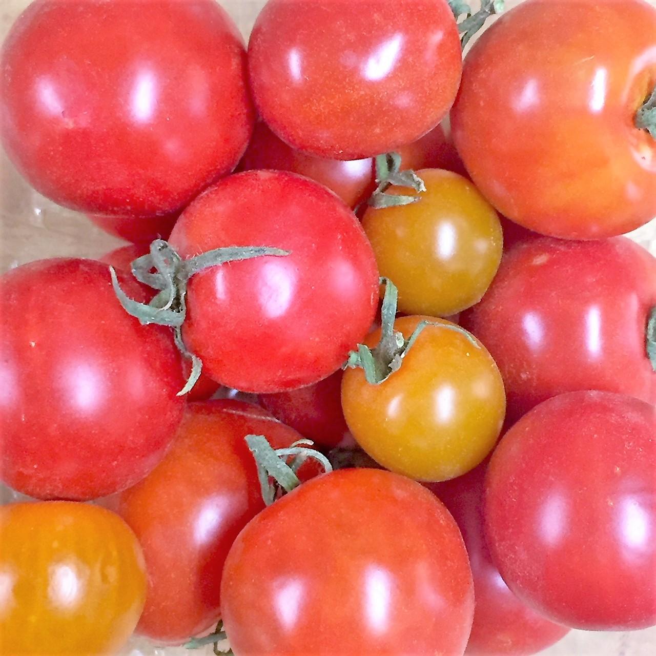 http://blueskyorganicfarms.com/wp-content/uploads/2018/09/AO_Cherry-Tomatoes.jpg