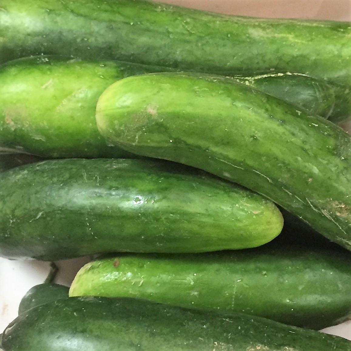 http://blueskyorganicfarms.com/wp-content/uploads/2018/09/AO_Cucumbers.jpg
