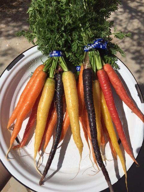 http://blueskyorganicfarms.com/wp-content/uploads/2018/09/AO_Rainbow-Carrots-e1538074488450.jpg